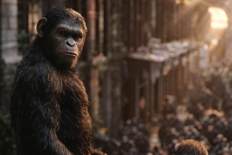 Planet der Affen Revolution (2014) Filmbild 2