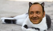 Kevin Spacey Katze
