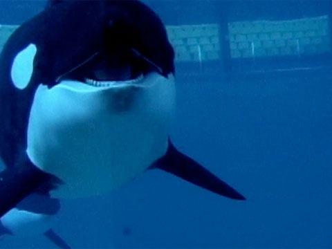 Blackfish (2013) Filmbild 1