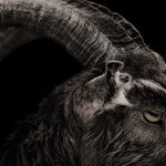 The Witch (2015) Filmkritik
