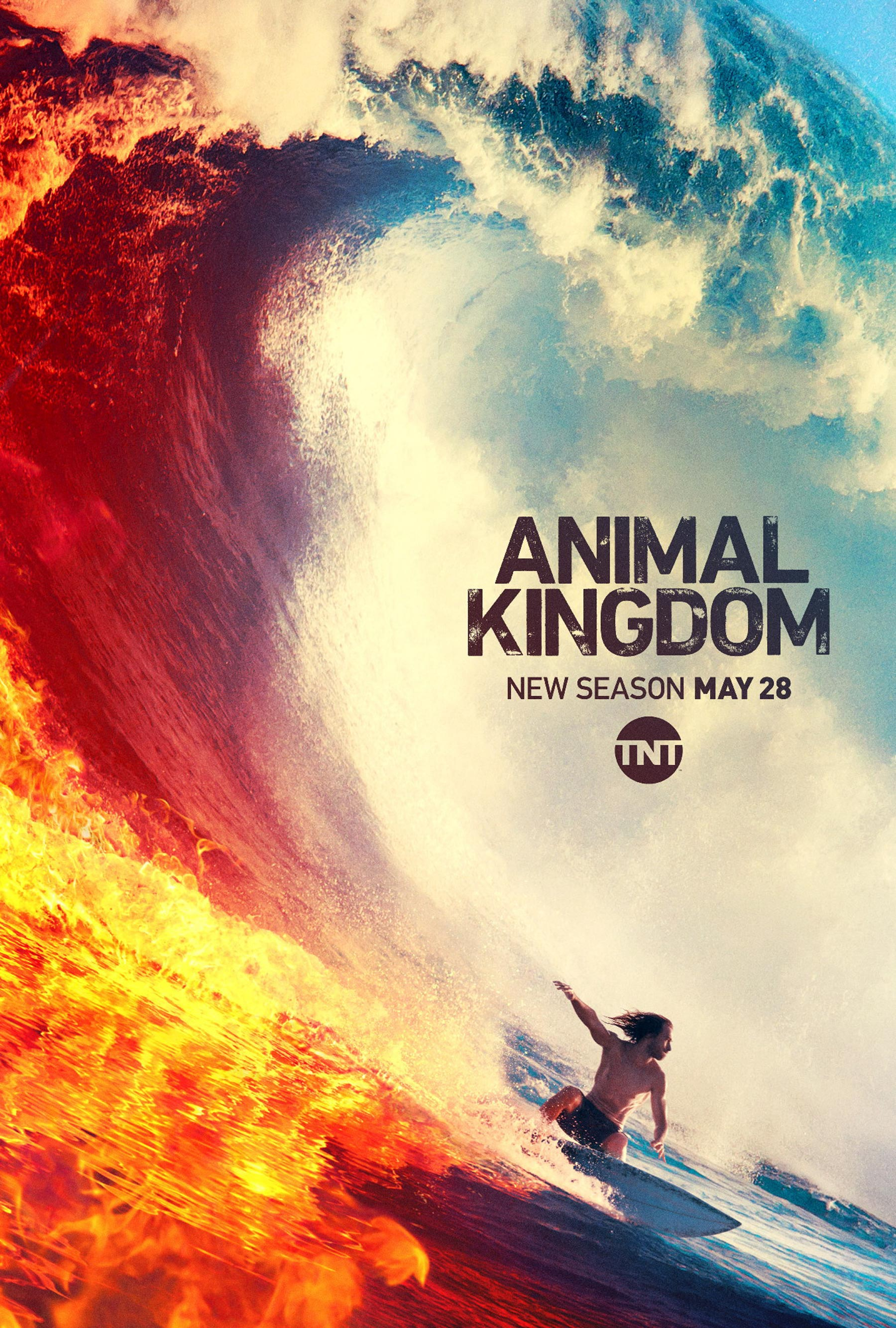 Animal Kingdom Staffel 4 Poster