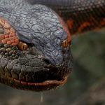 Anaconda Reboot