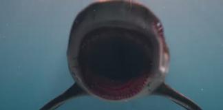Deep Blue Sea 3 Trailer